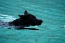 1. Hundeschwimmen 2017